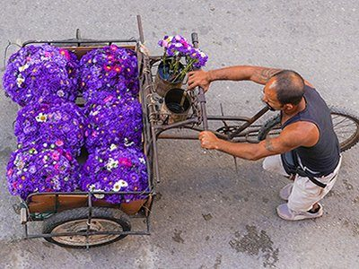 A_Fleurs chariot
